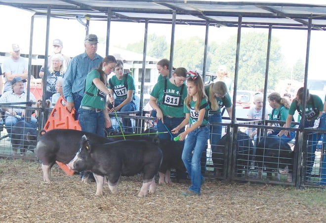 Gaining show ring experience showing pigs is a fun experience for many, including Cali Newdigger (left), Kambry Moreland, McKenna Morland and Kodi Davidson (all in middle of photo). Exhibiting the Grand Champion Berkshire pig of the day was Reagan Blasi (front) at the 2021 Pratt County Fair.
