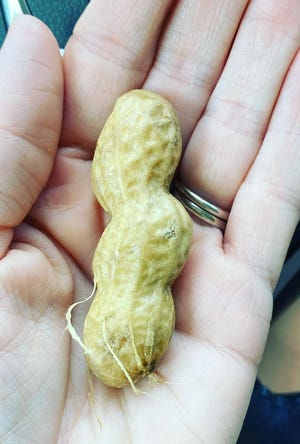 This little legume can tear apart families - if you don't buy more than one bag.