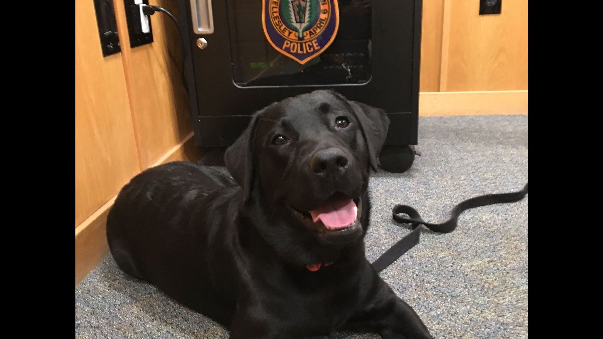 Puppy stolen from front yard in Wellesley; two Framingham residents charged