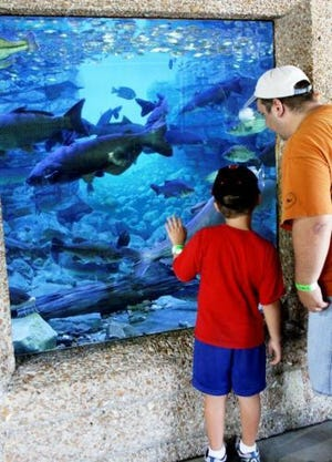 Discover nature with MDC at the Missouri State Fair in Sedalia Aug. 12-22. Visit MDC's Conservation Building from 9 a.m. to 7 p.m. to see live fish and learn about great ways to spend time in nature.