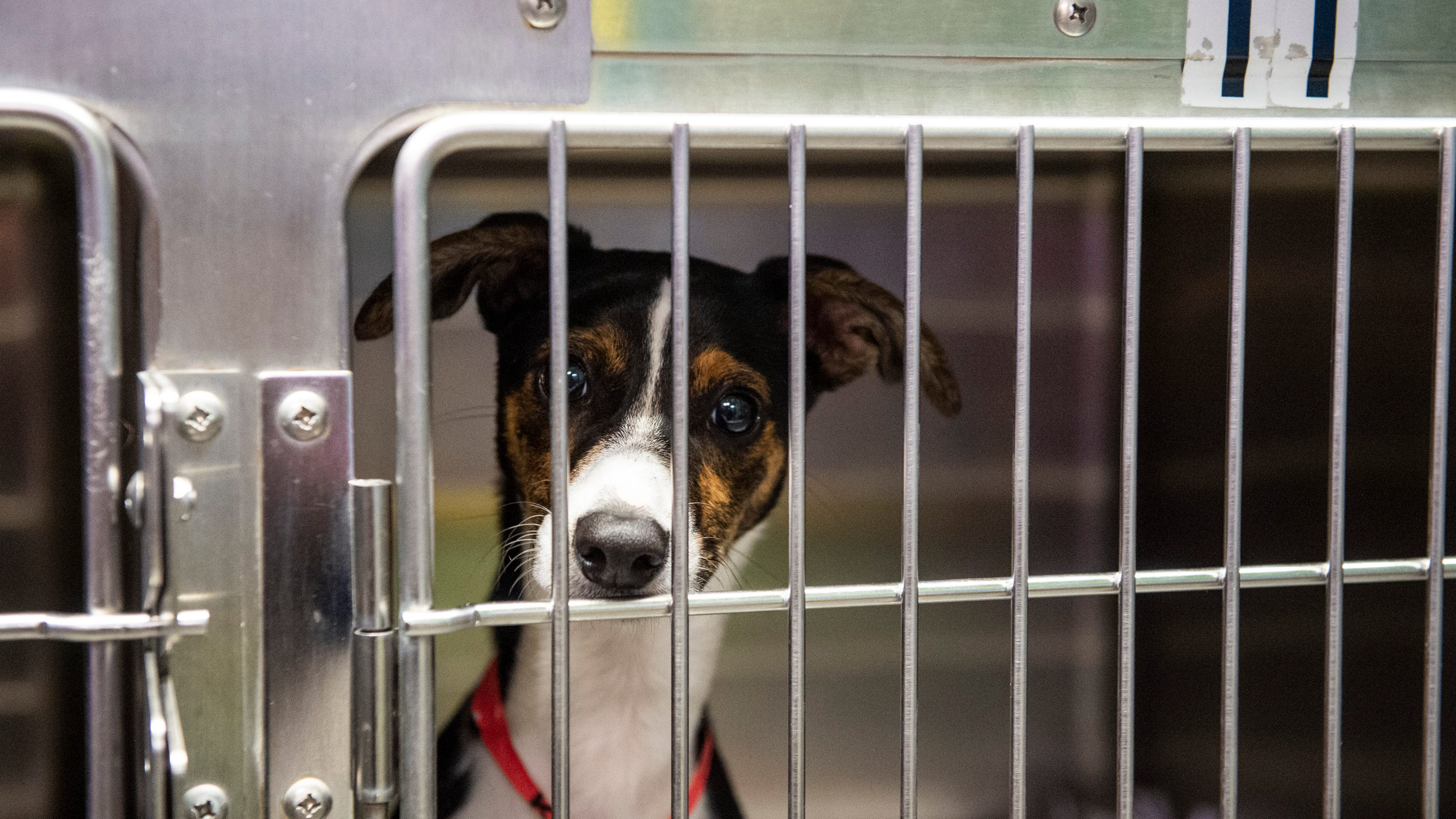 Think you may have to surrender your pet? Here's how to get help