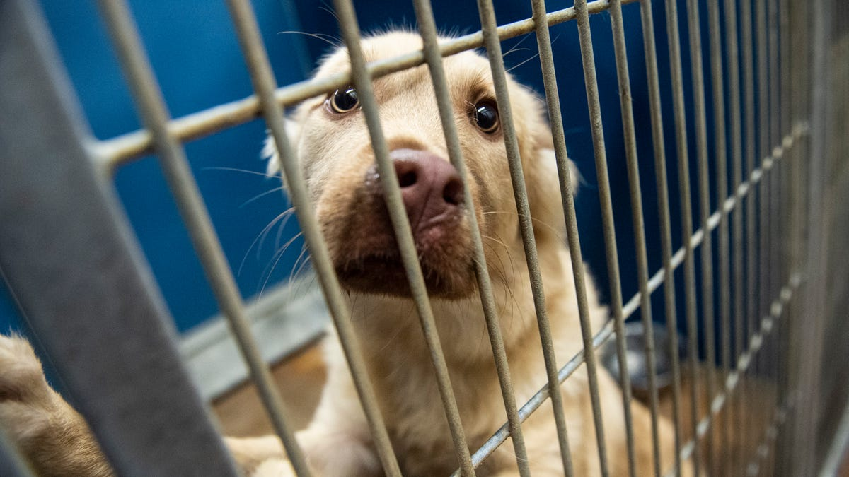 As pandemic eases, once-loved pets being dumped at shelter in 'disheartening' numbers