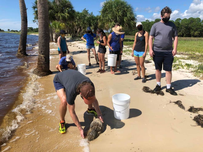 A UF study found no significant differences between data collected by volunteers and data collected by trained scientists.