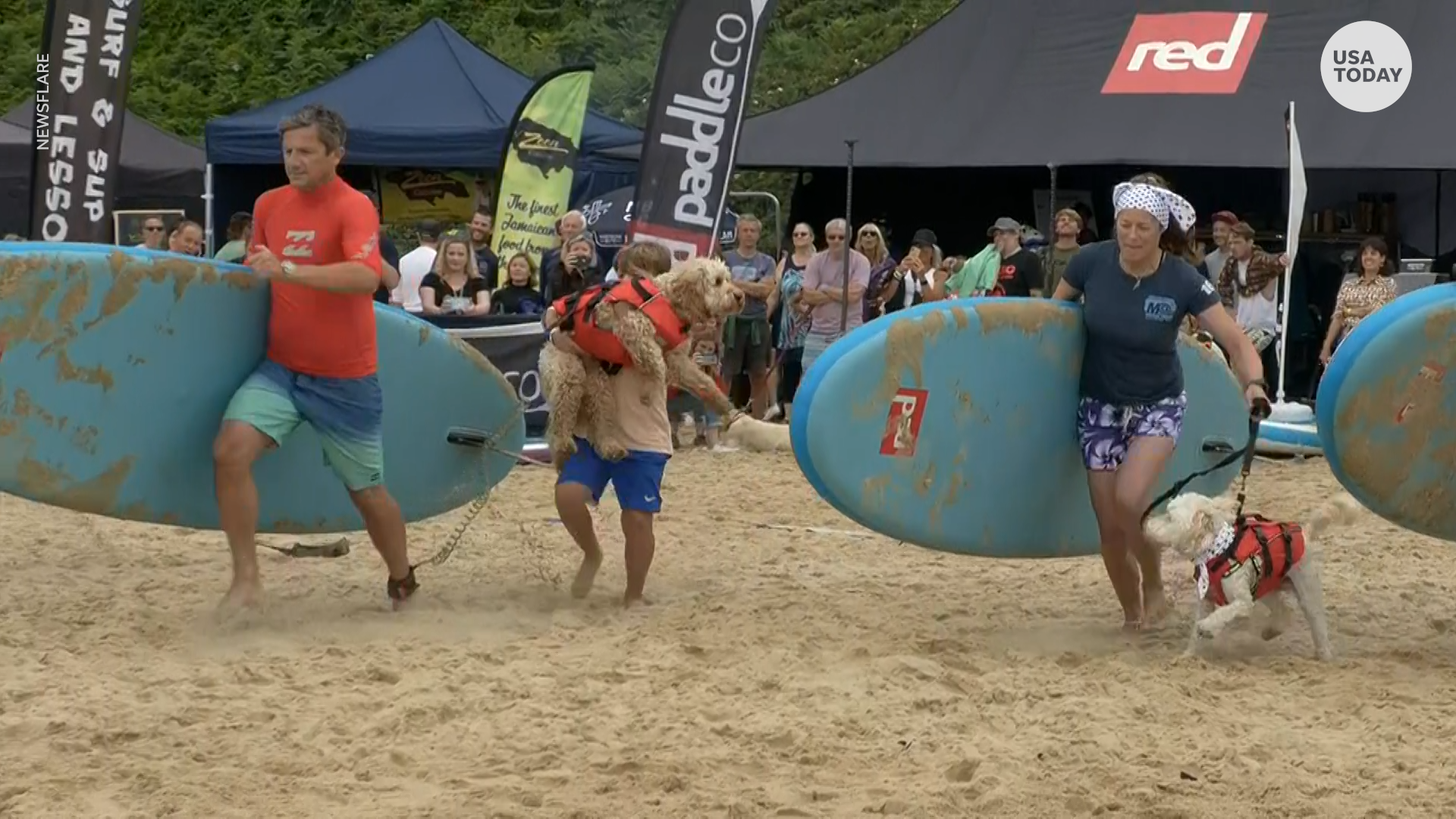 Dogs ride the waves with their owners at the 2021 U.K. Dog Surfing Championships