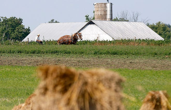 An Amish farmer is seen working in his field on Township Road 1106 on Tuesday, July 27, 2021. TOM E. PUSKAR/TIMES-GAZETTE.COM