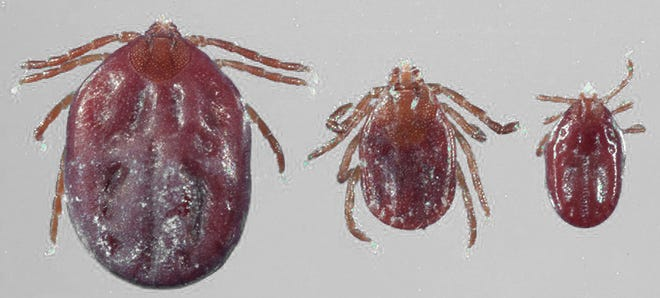 First confirmed presence of an Asian Longhorned Tick Confirmed in Missouri.