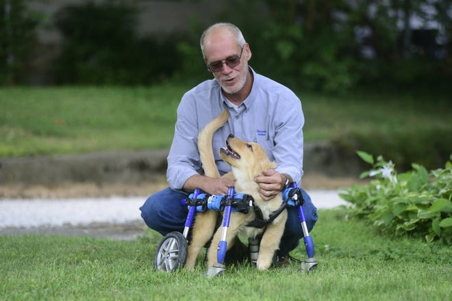 John Lizotte comforts Mila, a 4-month-old golden retriever, at Rescued Rollers, a special needs dog rescue in Galion.