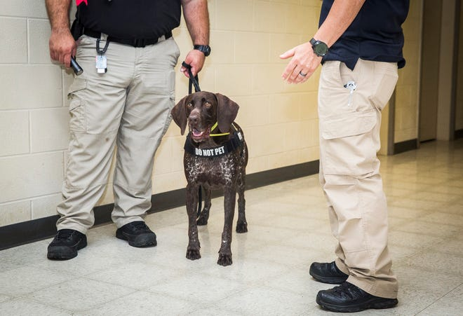 TSA bomb sniffing dog Ari is rewarded with his chew toy after successfully locating a mock explosive device at the former Justice Center on Walnut Street Tuesday afternoon.The state's annual multi-agency K9 training was held, for the first time, in Muncie due to the availability of space at the vacant, former Justice Center.