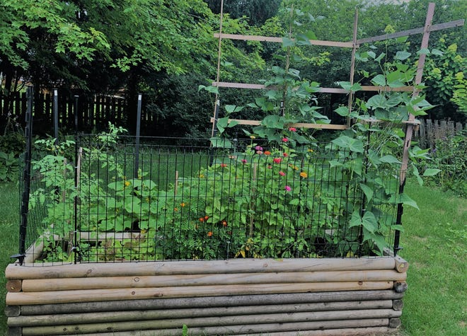 What's in Jerry Apps' little backyard garden that seems to be outdoing itself this year?