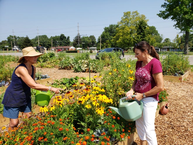 Rain Burroughs (left) and Nancy Gosztyla, both of Grove City, work together June 27 to water Gosztyla's plot at the Grove City Community Garden in Fryer Park. Burroughs and Gosztyla are among 38 residents who signed up for plots at the garden, a new initiative by the Grove City Parks and Recreation Department. Both women have completed Ohio State University Extension's Master Gardener program and are serving as leaders to help grow the Grove City's community garden project. Gosztyla's plot at the community garden includes tomatoes, peppers, cucumbers and marigolds and other flowers.