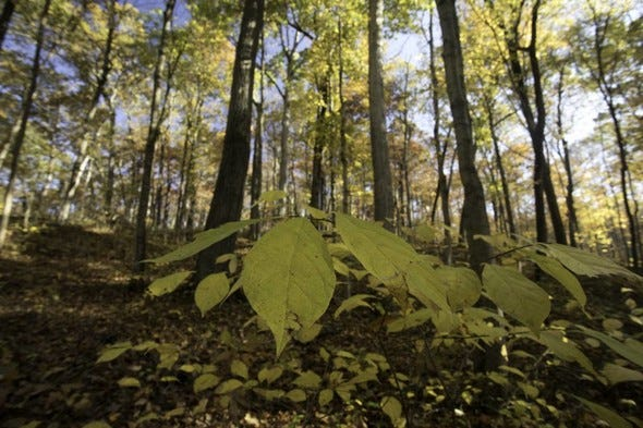 MDC invites landowners and property managers to a free workshop on forest and wildlife management in Callaway County Sept. 11. Participants will learn how to actively manage their own properties for improved wildlife habitat, as well as ecological and economic value. Registration is required by Sept. 8.
