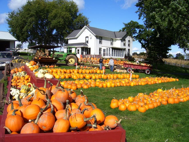 Cozy Nook Farm in Waukesha sells pumpkins, and invites the public to visit in fall. Cozy Nook has about 75 milking cows, and it sells Christmas trees too.