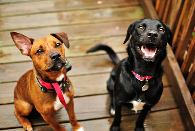No two mutts are alike. That can make your dog the talk of your block, the latest social media star or simply a great companion.