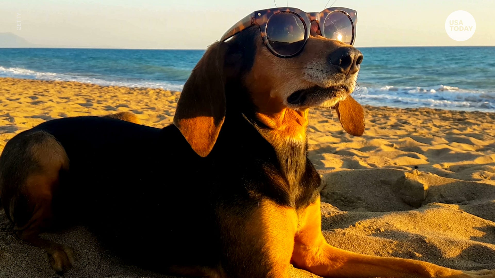 Bring your pets with you on your next adventure with these travel tips