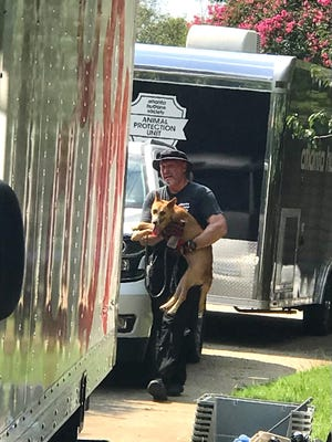 At Atlanta Humane Society worker carries a dog to a truck Thursday where the dog and about 20 others were taken to Atlanta to find new homes. The dogs' Hephzibah-area former caretaker was jailed Thursday after she was charged with animal cruelty.