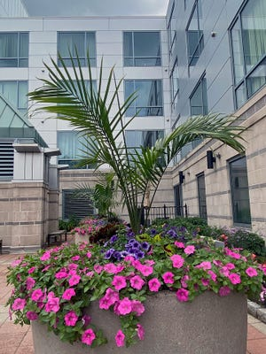 Here are among the many flowers people can see at 50 West Broadway in South Boston.