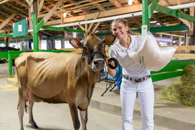 Cara Walker and her Jersey took top honors in the 4-H Dairy Show Senior Showmanship competition at the Ontario County Fair. [MELODY BURRI FOR MESSENGER POST MEDIA]