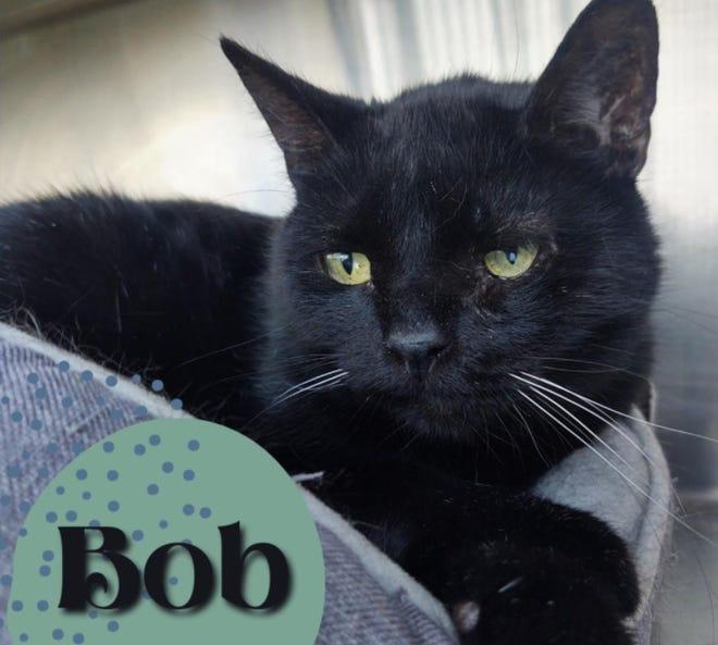 Bob is the Wellington Humane Society Pet of the Week