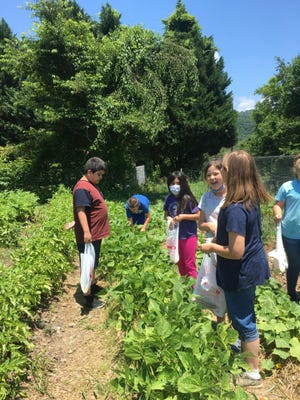 Hot Springs Elementary students pick from their garden this summer. When students return to school Aug. 16, wearing masks will be optional after the Madison County Board of Education voted in its July 26 meeting to not mandate students to wear masks.