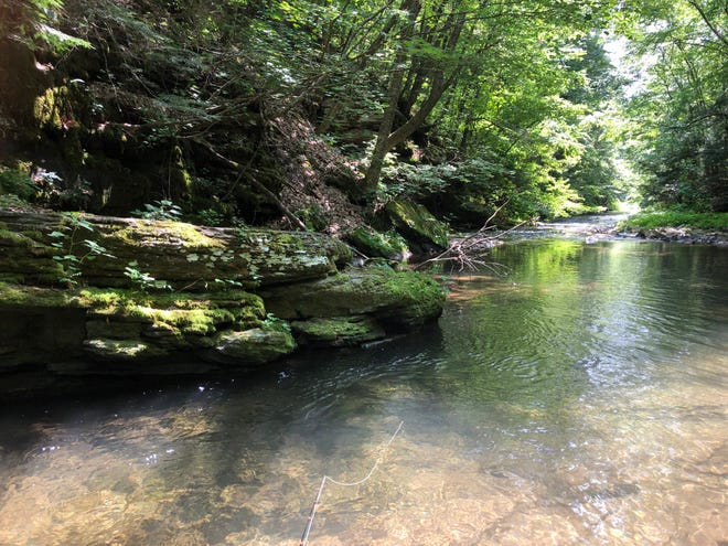 The upper reaches of Slate Run, a famous and famously difficult-to-fish trout stream in northern Pennsylvania