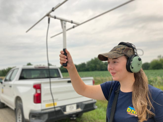 Brier Klossing, a biology and animal ecology major at Iowa State University and Mount Pleasant native, holds an antenna Friday while picking up a signal from a transmitter backpack that was affixed last winter to a turkey hen in southern Iowa. Klossing, a seasonal technician for the Iowa Department of Natural Resources, has been spending her summer helping to collect and track data on turkeys as part of a telemetry study intended to determine the driving factors behind declining turkey populations.