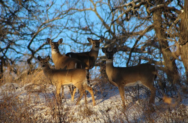 The DNR is offering a variety of hunting skills webinars for the upcoming hunting seasons.