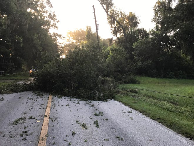 This downed tree was blocking County Road 329 in Citra on Friday.