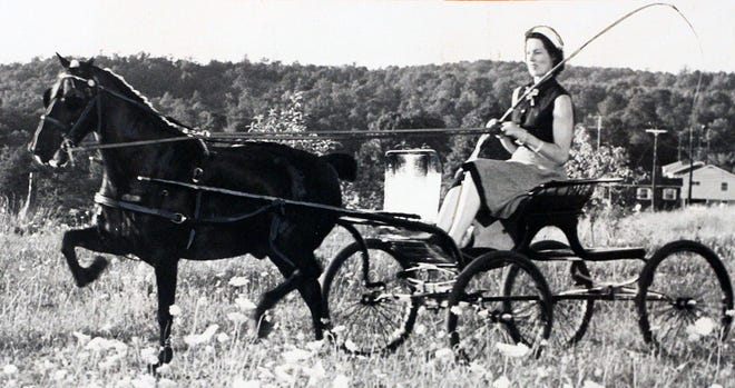 In 1953, Mrs. Delmar Shepard drives a carriage pulled by Black Satin, a registered Hackney pony.