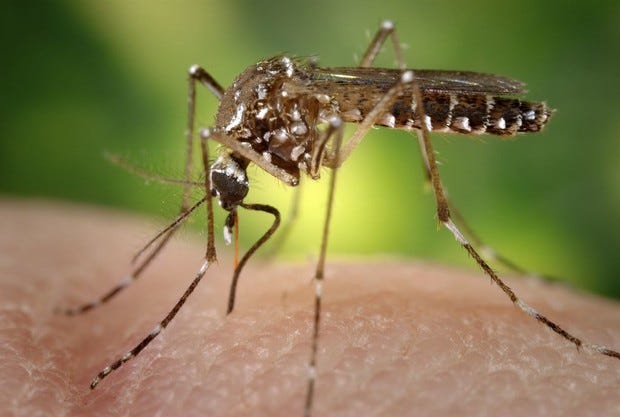 Two pools of West Nile-positive mosquitoes have been found in Wichita Falls.