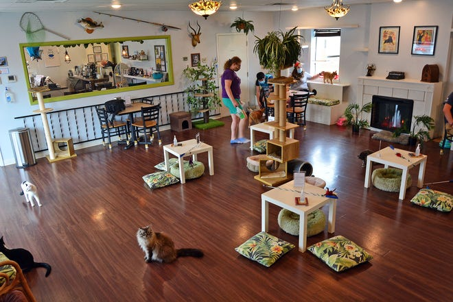 Papa's Cat Cafe celebrated its three-year anniversary this weekend. Owners Mackenzie Everett-Kennedy and Ryan Kennedy are encouraging people to consider giving cats with feline leukemia a loving home. The cafe holds special pop-up events Sundays with feline leukemia cats.