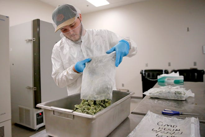 Casey Tidwell places frozen marijuana in a tub inside 1440 Processing in Choctaw, Okla., Tuesday, July 27, 2021.