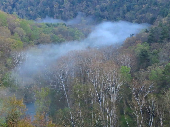Sycamore trees (along with the mist in this case) define the river channel below in Clear Fork Gorge.
