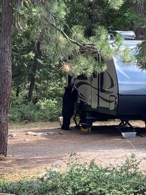 A curious bear snoops at a travel trailer at Fowler's Campground in this photo shared by the U.S. Forest Service - Shasta-Trinity National Forest on their Facebook page.
