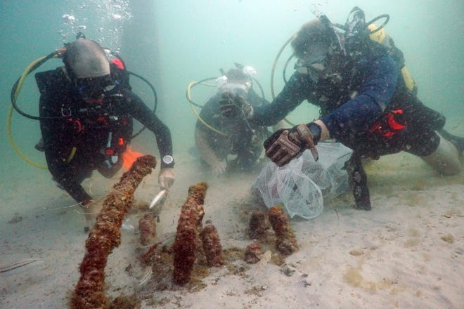 Divers collect fishing tackle and other debris from around the Okaloosa Island Fishing Pier during a cleanup last month. On Sunday, more than 50 divers are expected to perform another underwater cleanup around the pier.