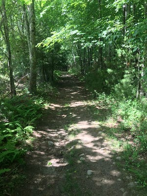 Wide pine needle-covered trails that were once cart paths crisscross Sprague Farm.