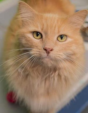 Butterscotch is available for adoption through WARL.