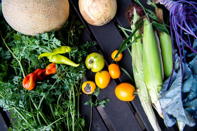 For West Texas vegetable gardens, August is the time to plant crops such as beans, corn, cucumber, eggplant peppers, squash, potatoes (don't cut the seed pieces, plant whole), and tomatoes (large transplants).