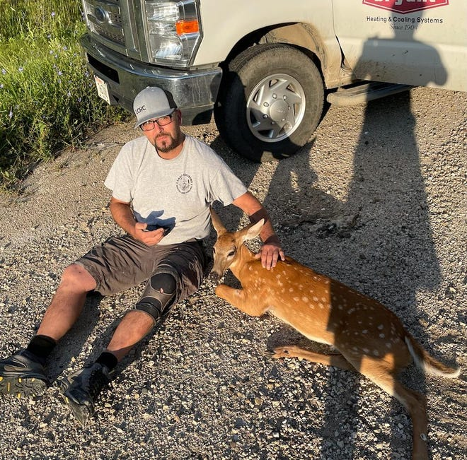 Hartland man Matt Miller comforts a  young deer in Sussex on his way to work Friday, July 30.  The deer injured its back two legs.