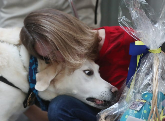 Avery, a facility dog for the Summit County Prosecutor's Office, seems more interested in the treat basket as he gets a hug Tuesday from Sallie Carey of Columbus at the dog's 10th birthday party at the Ocasek Building in Akron.