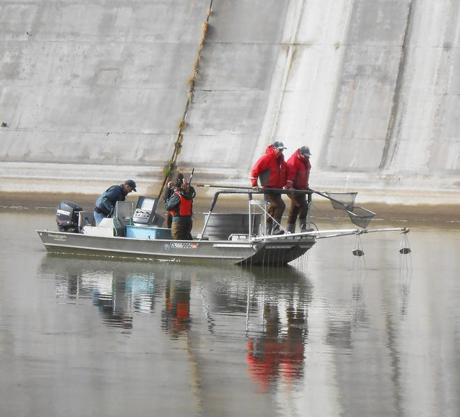 Crews work to remove specimens from the John Martin Reservoir in 2018.