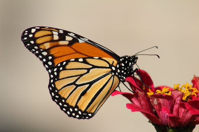 The butterfly is a symbol for the soul representing beauty, serenity, hope and peace.
