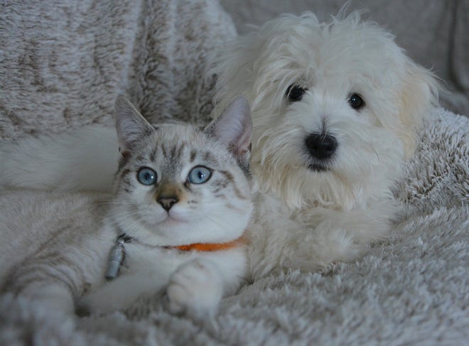 There currently is no COVID-19 vaccine for pets.