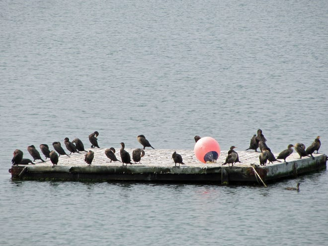 Birds have taken over this part of the swimming area at Castle Island.