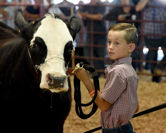 Lyndon Delmotte, 9, of Dundee looks over at the 4-H judge while showing his light weight reserve champion in the final at the Monroe County Fair 4-H steer show.