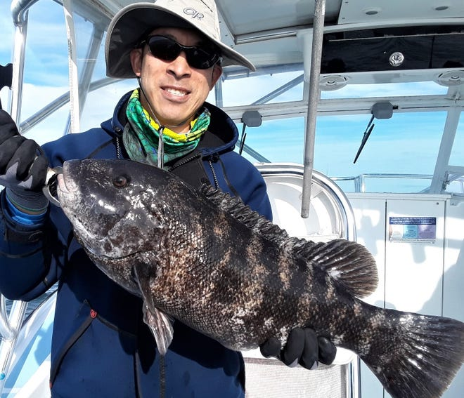 """Jamie Wong with a tautog caught in the fall off Newport. Tautog season opened with a three fish/person/day limit (16"""" minimum size) this week in Rhode Island and Massachusetts."""