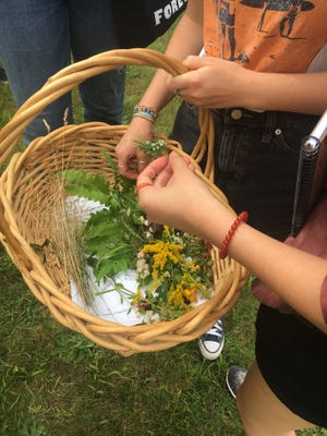 Art students visited Herring Pond Wampanoag land in Cedarville to collect plant material for an art project on the tribe.