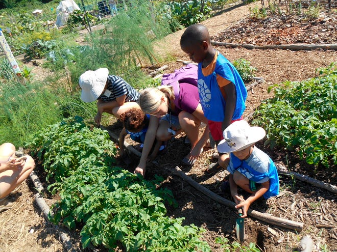 In this photo provided by Ginny Hughes, members of the Troy Kids' Garden Learning Community plant together at Troy Gardens in Madison, Wis. (Ginny Hughes via AP)
