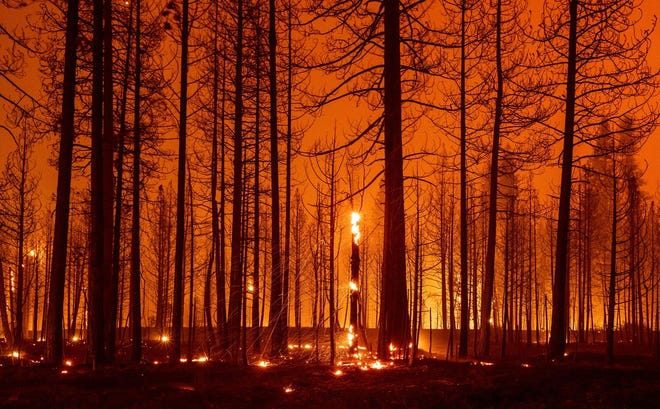 Trees burn during the Dixie Fire near Greenville, California, on August 3.