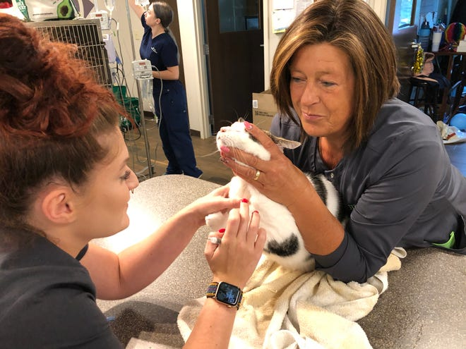 Veterinary technicians Abigail Holland (left) and Anja Smith help treat a one-eyed cat named Popeye at Hill Top Animal Hospital in Evans. A rise in pet ownership during the COVID-19 pandemic has made veterinary practices much busier.
