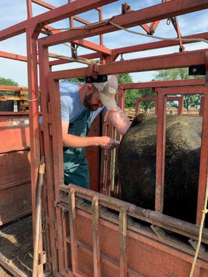 Rural veterinarian Eric Knock works with Prairie View Veterinary Clinic.